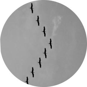 Leadership workshops - birds flying in arrow