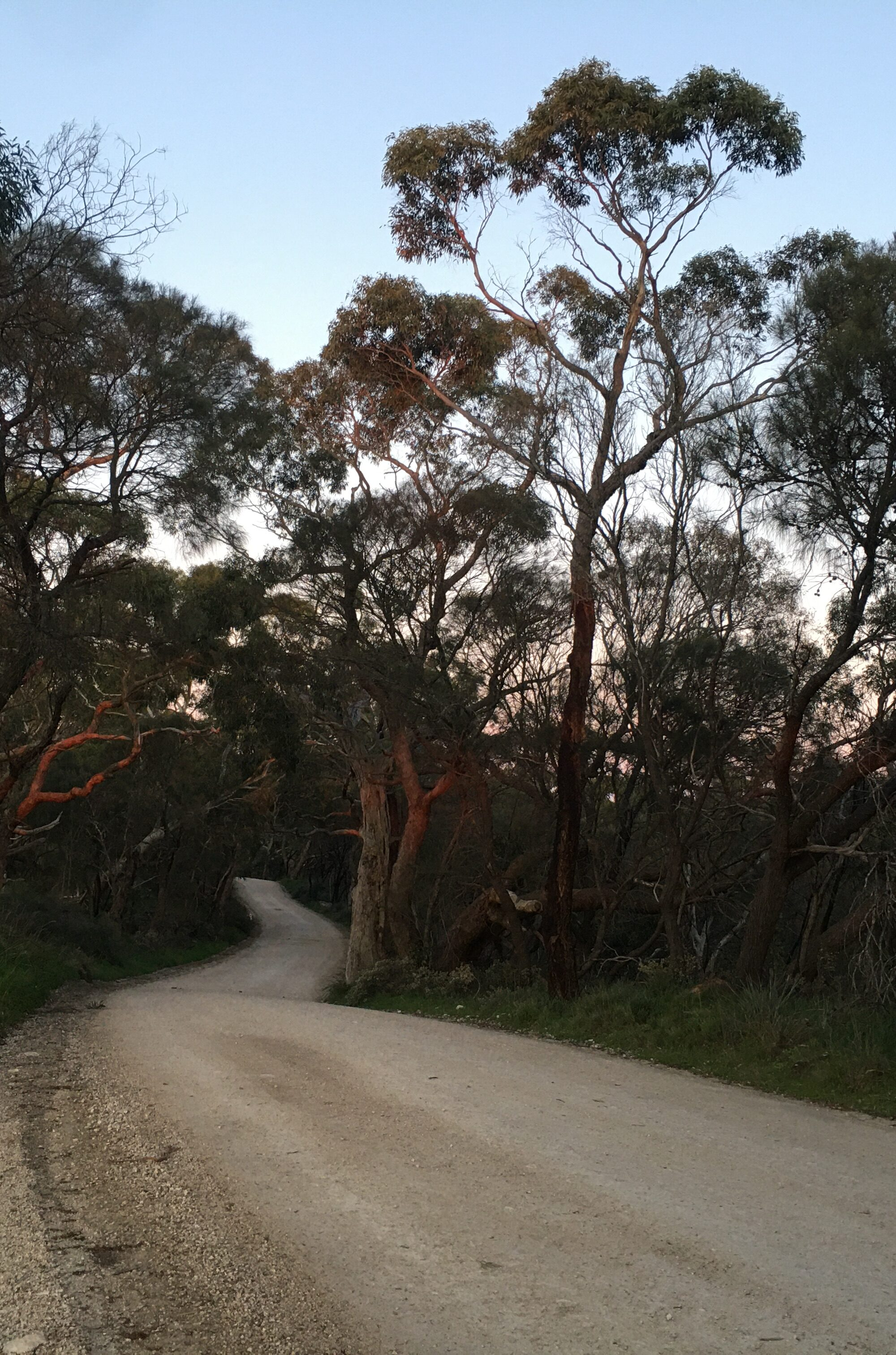 Late afternoon in the Adelaide Hills